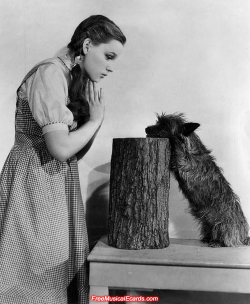 Judy Garland as Dorothy and Toto on the set of The Wizard of Oz