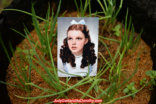 Classic beauty Judy Garland as Dorothy in stunning backdrops