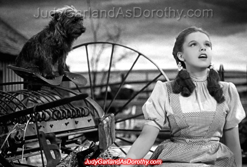 Judy Garland as Dorothy and Toto on her Kansas farm